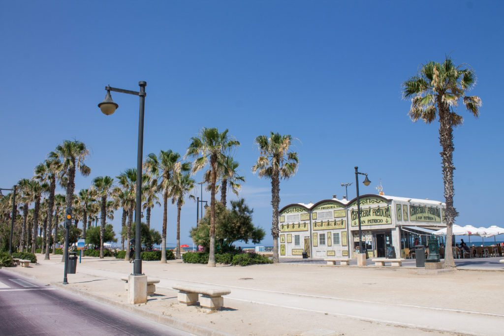palm trees at the beach in Valencia