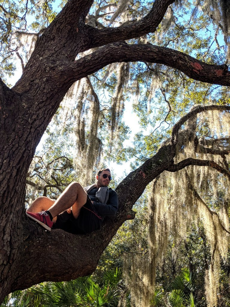 man reclining in a tree with hanging spanish moss