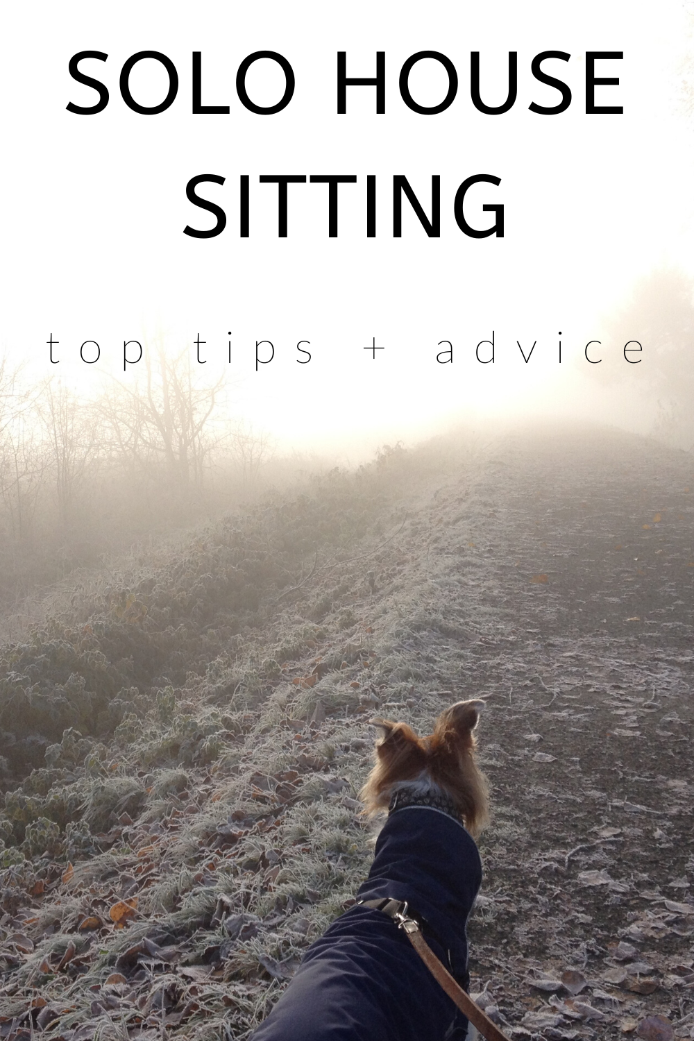 Want to try house sitting but afraid of house sitting alone? Read this interview by solo house sitter Ryan Patey. Read his top tips for overcoming challenges, best practices, the best house sits, and more!