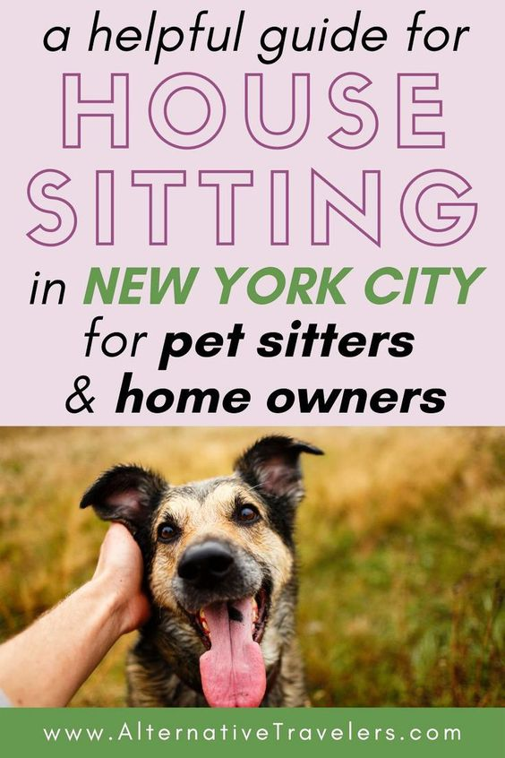 helpful guide house sitting nyc